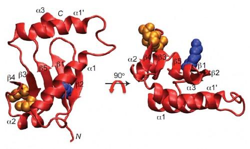 식물의 생장호르몬